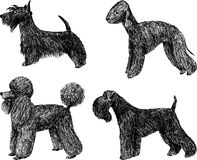 Toy dogs Stock Images