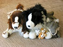 Toy dogs family. Plush toy dogs family Stock Photography