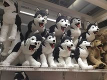 Toy dogs in IKEA shop Stock Photography