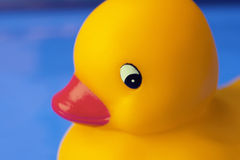 Toy duck. Close-up of toy duck stock photo