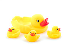 Toy Duck Family. Group of rubber ducks yellow next to each otherr stock image