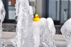 Toy duck on a jet fountain Royalty Free Stock Photography