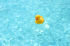 Toy duck in the pool. Toy duck swimming in the pool Stock Photo