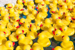Toy ducklings in the water Royalty Free Stock Photography