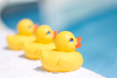 Toy ducks. Three yellow toy ducks on a white towel besides a swimming pool depicting summer season Stock Image