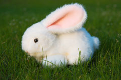 Toy Easter Bunny Royalty Free Stock Images