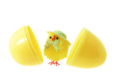 Toy Easter Chick and Egg Shells Stock Photo