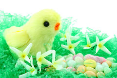 Toy Easter Chick With Flowers And Candy. A fuzzy yellow toy chick in a bed of plastic Easter grass with white silk flowers and a pile of pastel jelly bean Stock Photo