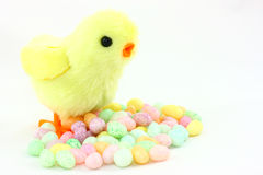 Toy Easter Chick With Jelly Beans. A fuzzy yellow toy chick ready for Easter morning, stands over a pile of pastel colored jelly bean candies Stock Photos
