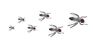 Toy Flies Royalty Free Stock Photos