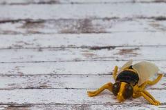 Toy Fly Insect plástico amarillo en fondo de madera Imagenes de archivo