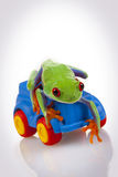 Toy and Frog Royalty Free Stock Images