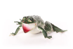 Toy Frog. Green frog toy isolated on white background Stock Photo