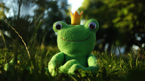 Toy frog. June 8th 2015 Stock Image