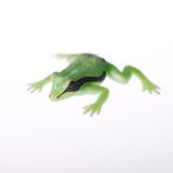 Toy Frog Stock Photography