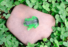 The toy frog royalty free stock photos