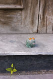 Toy frog sitting on the contry porch. Toy frog sitting on the contry porch Royalty Free Stock Images