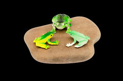 Toy frogs on a stone Royalty Free Stock Photography