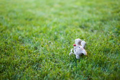 Toy on the grass with copyspace Stock Images