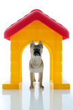 Toy guard dog Royalty Free Stock Images