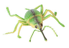 Toy Insect Royalty Free Stock Photo