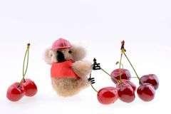 Toy koala collecting Sweet cherries Royalty Free Stock Photo
