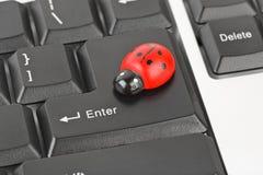 Toy ladybird on computer keyboard Stock Photo