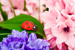 Toy ladybug and flowers Stock Image