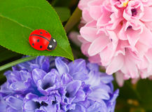 Toy ladybug and flowers Royalty Free Stock Photography