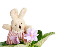 Toy little doe rabbit with violet flowers Royalty Free Stock Images