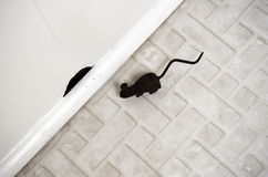 Toy mouse by a hole in floor Royalty Free Stock Photos