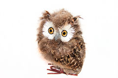 Toy owl Royalty Free Stock Photos
