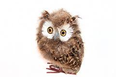Toy owl Royalty Free Stock Photos