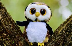 Toy owl placed in tree Stock Images