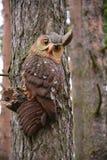 Toy- owl on te pine tree Royalty Free Stock Photo