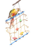 Toy for parrot Stock Image