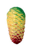Toy pine cone Stock Image