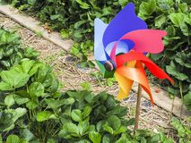 Toy placed in front of a garden to scare away frighten not only birds but wild animals. Toy to make noise placed in front of a garden to scare away frighten not stock photography