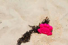 Toy plastic pink crab on the beach. Stock Images