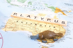 Toy platypus on map of Australia royalty free stock image