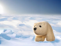 Toy polar bear cub in Arctic Stock Photography