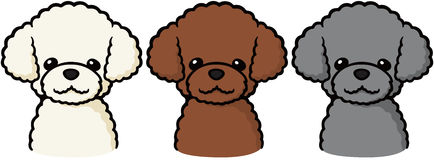 Toy Poodle  Stock Photos