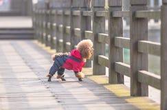 Toy Poodle som spelar i en parkera royaltyfria foton