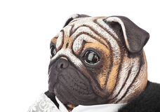 Toy pug dog in butler costume Royalty Free Stock Photos