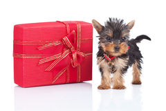 Toy puppy standing near a big present Royalty Free Stock Photo