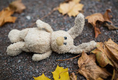 Toy rabbit and autumn leaves on road or ground Stock Photos