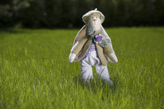 Toy rabbit on grass. Cute toy rabbit in trousers and coat standing on the grass, outdoors Stock Photo