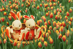 Rabbits among the tulips. Royalty Free Stock Photos