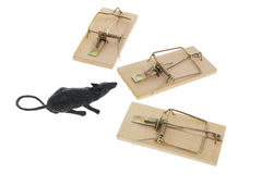 Toy Rat and Mousetraps Stock Photo