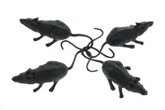 Toy Rats Royalty Free Stock Image